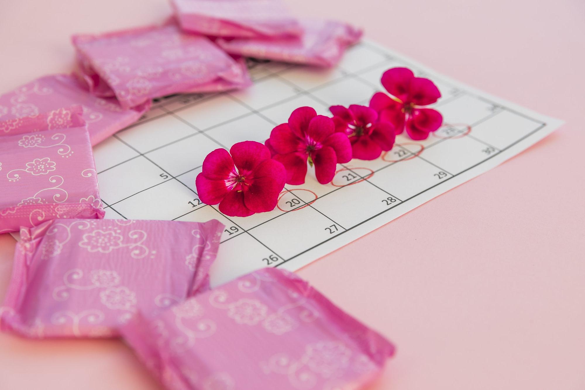 importância da ovulação no ciclo menstrual